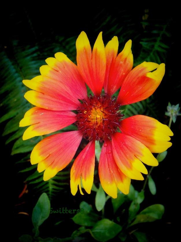 flower-garden-SwittersB