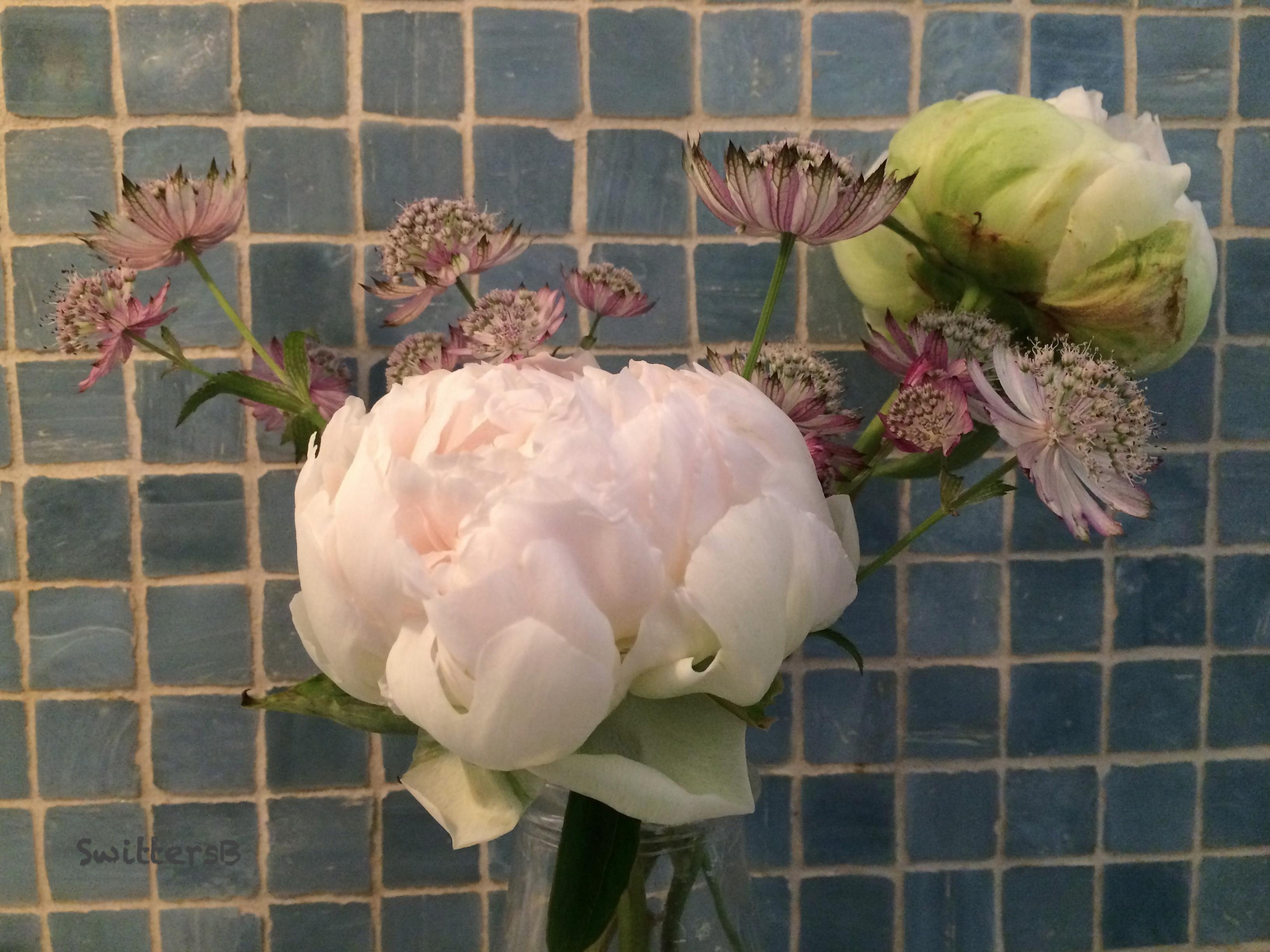 nostrana-bathroom flowers-SwittersB