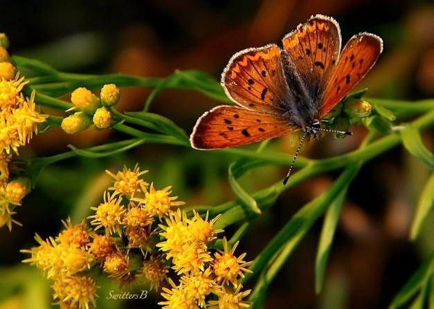 butterfly-moth-SwittersB-lakes