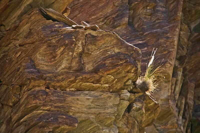 tuft of grass-cliff-desert-SwittersB