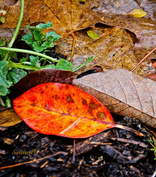 Fall color-leaves-bright spot-SwittersB +