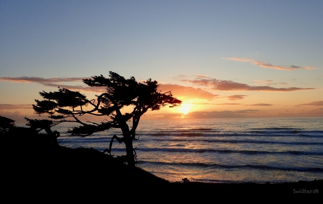 Oregon Coast-solitary tree-SwittersB
