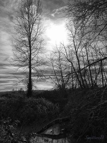 Fall-Sauvie island-SwittersB