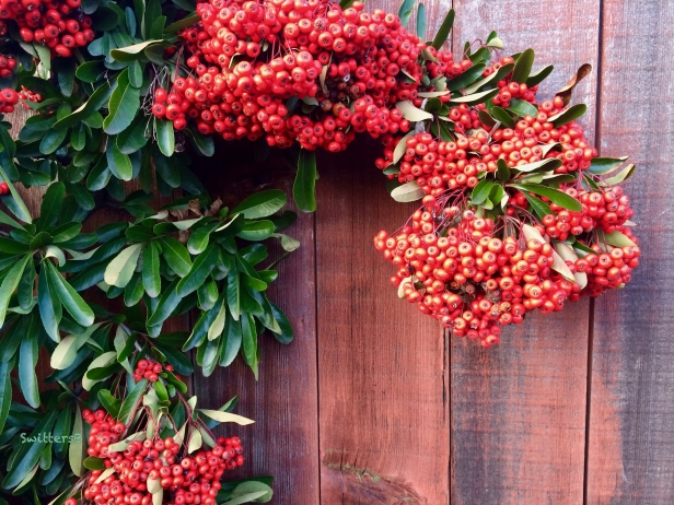 red berries-fence-swittersB x