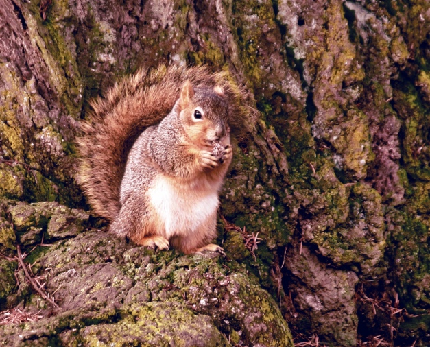 Squirrel-Tree-Eating-SwittersB
