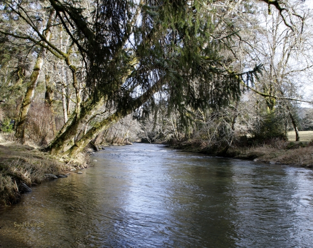 Salmon River-solitude-SwittersB.jpg