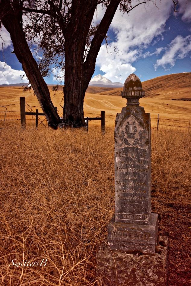 brambles & headstone-cemetery-SwittersB-Oregon