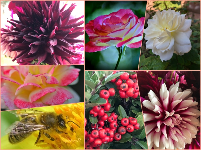 October Garden 2018-Collage-SwittersB.jpg