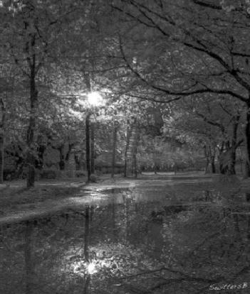 Living Desert-Cold Night-light-trees-SwittersB