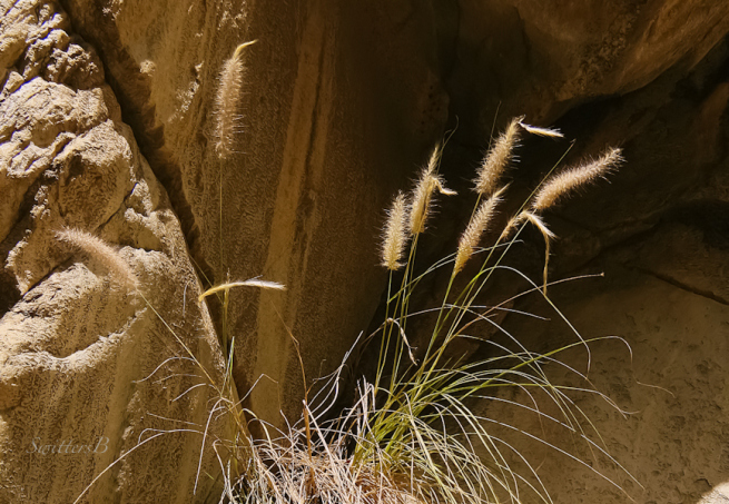 canyon-tahquitz-plants-rock-wall-swittersb-photography