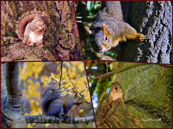 squirrels visiting-trees-swittersb