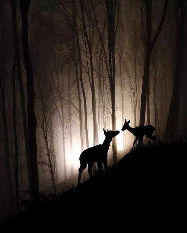 SimplyBeautiful 2 deer woods